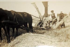 Feldarbeit in Groß Krössin
