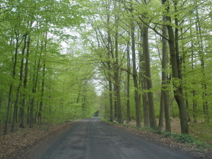 Wald ums ehemalige Gut Carlshöh, 2010